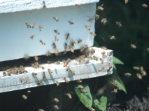 New Bee Orientation